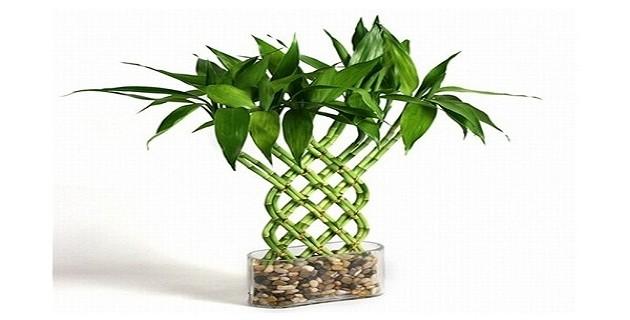 6 คีย์สินค้าไม้ไผ่ (Bamboo) ที่ต้องการมากที่สุดใน Amazon